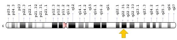 Gène GJA1